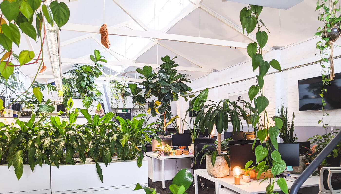 Jungle office in Adelaide